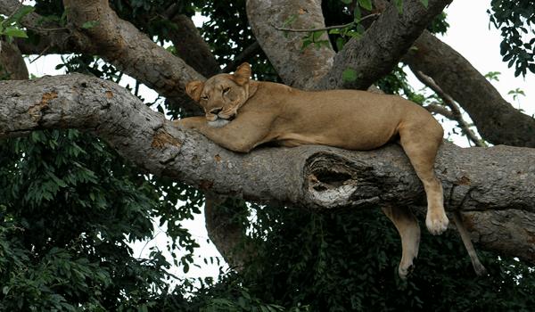 safari Uganda, car rental safari, Car hire Uganda, self drive uganda