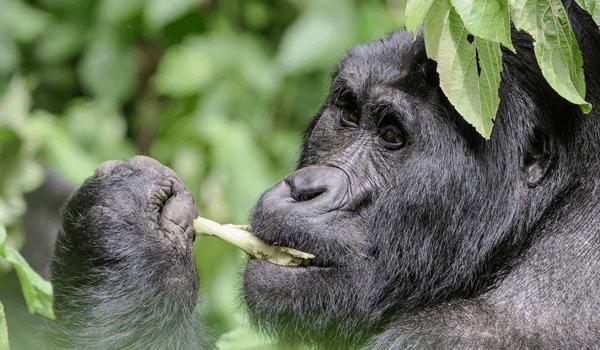 Uganda safaris, Self drive uganda, Car rental Uganda, Auto Rental Uganda
