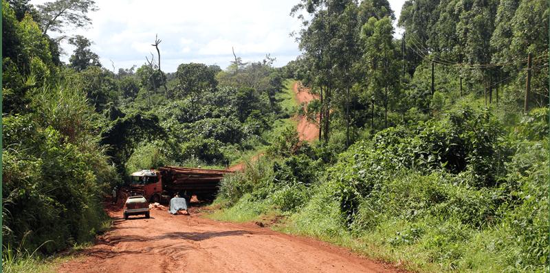 selfdrive safaris
