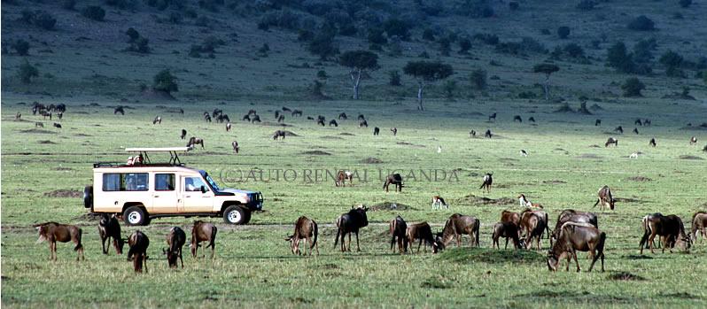 safariin uganda